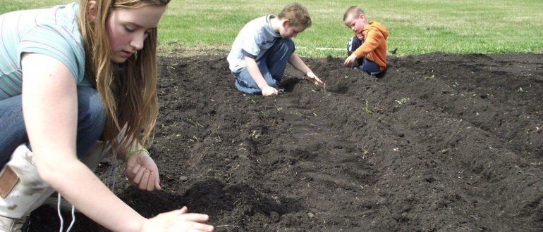 Донный ил (сапропель) как удобрение для огорода