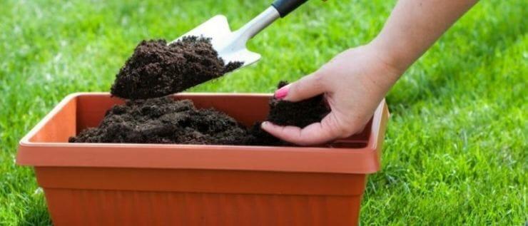 Соломенный огород: мешок картошки посадили, 25 собрали!