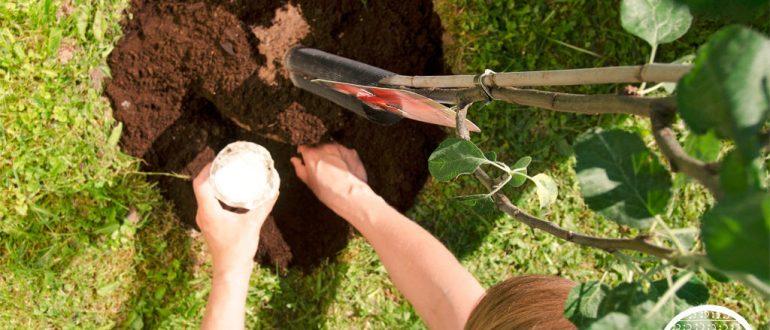 Энерген стимулятор роста: инструкция по применению Энерген Аква и в капсулах для семян и рассады
