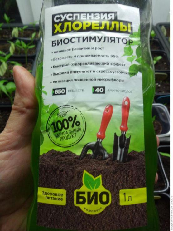 Хлорелла это растение
