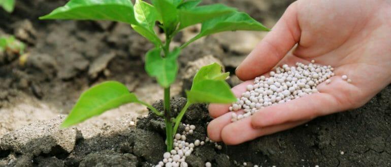 О вреде минеральных удобрений и синтетических витаминов – Дачные сезоны