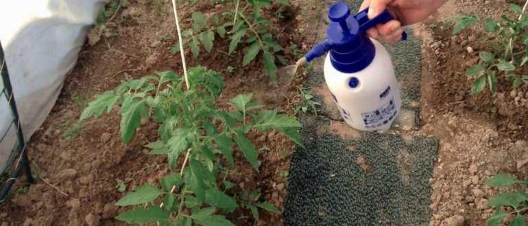 Аммиак применение в саду и огороде: польза, вред, для растений, для огурцов, для клубники, на даче