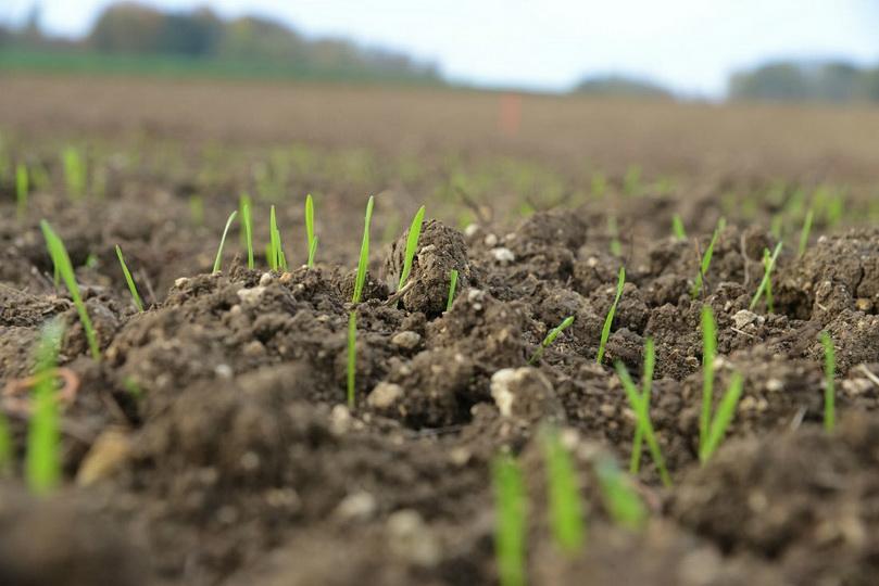 Удобрения для раскисления почвы