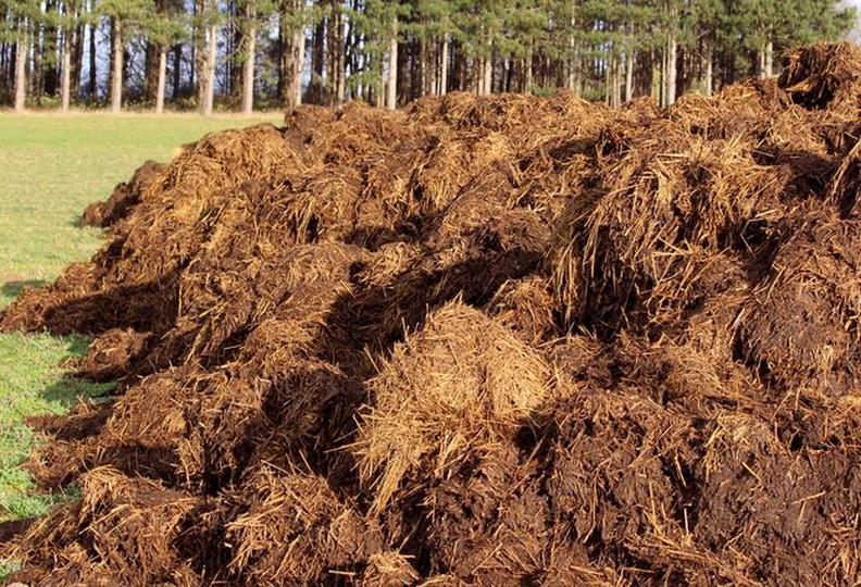Минеральные удобрения необходимо вносить в почву для