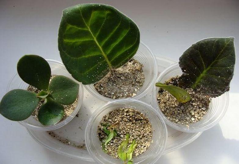 Как применять вермикулит для растений химический состав видео