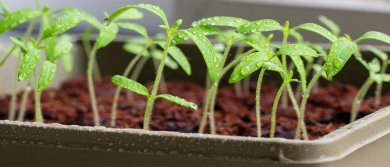 Эпин для растений инструкция по применению эпина