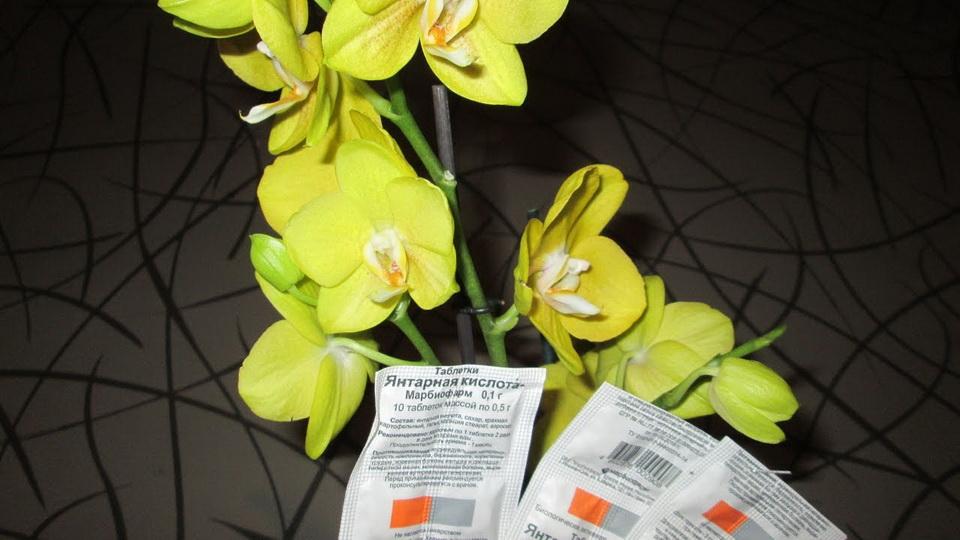 Как разбавить янтарную кислоту для орхидеи