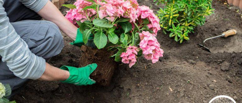 Удобрения для петуний правила подкормки петуний после всходов для роста Чем подкормить рассаду для обильного цветения