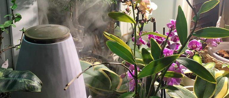 Сколько поливать орхидею фаленопсис в домашних условиях