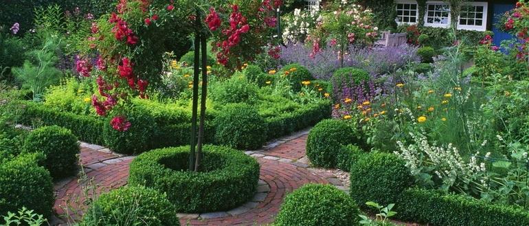 Чем полить деревья и кустарники осенью