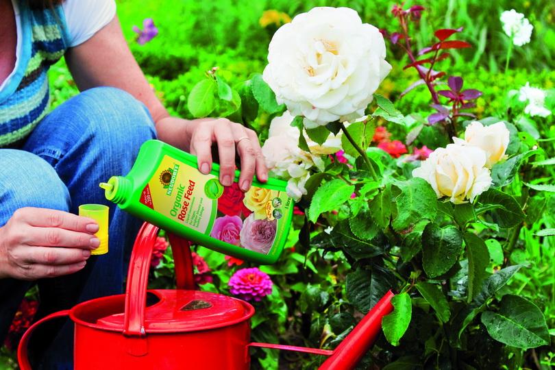 Чем удобрять комнатные цветы чтобы они цвели