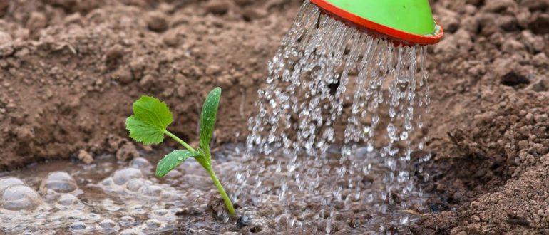 Когда вносить калийные удобрения для повышения урожайности{q}