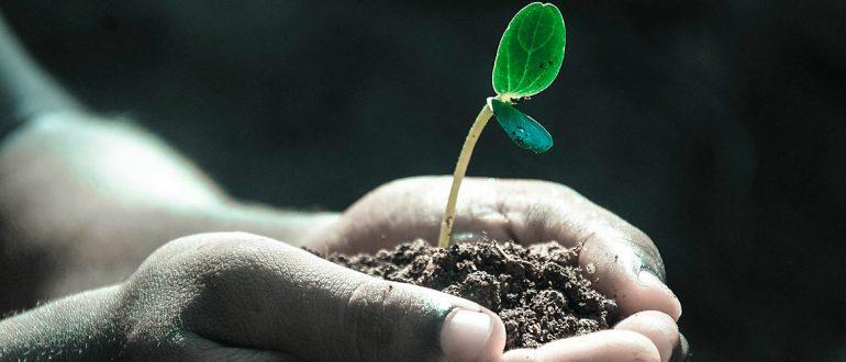 Азотные удобрения: какие бывают, их значение и применение в домашних условиях