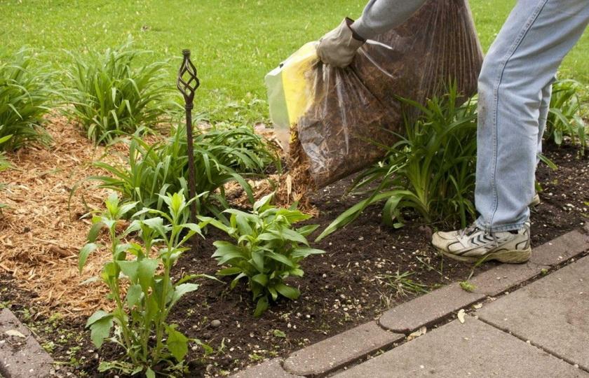 Опилки для огорода: польза и вред их как удобрения