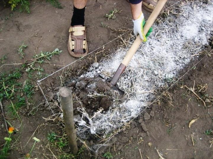 Доломитовая мука: что это такое, как использовать в огороде, применение известняковой муки весной