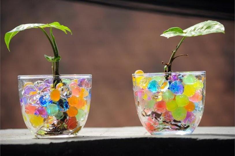 Для каких растений подходит гидрогель