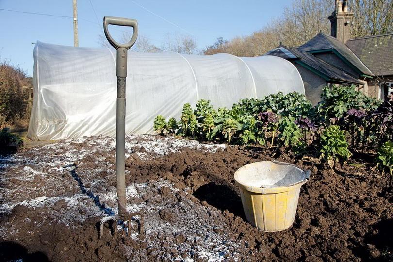 Доломитовая мука: для чего нужна и как использовать в огороде