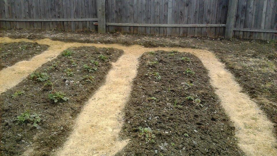 Применение опилок в огороде