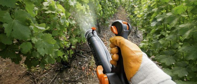 Средства обработки винограда препараты от заболеваний