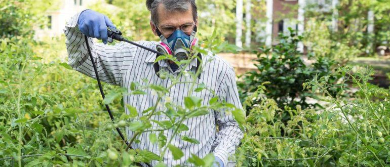 Фунгицид Хорус для винограда инструкция по применению когда обрабатывать