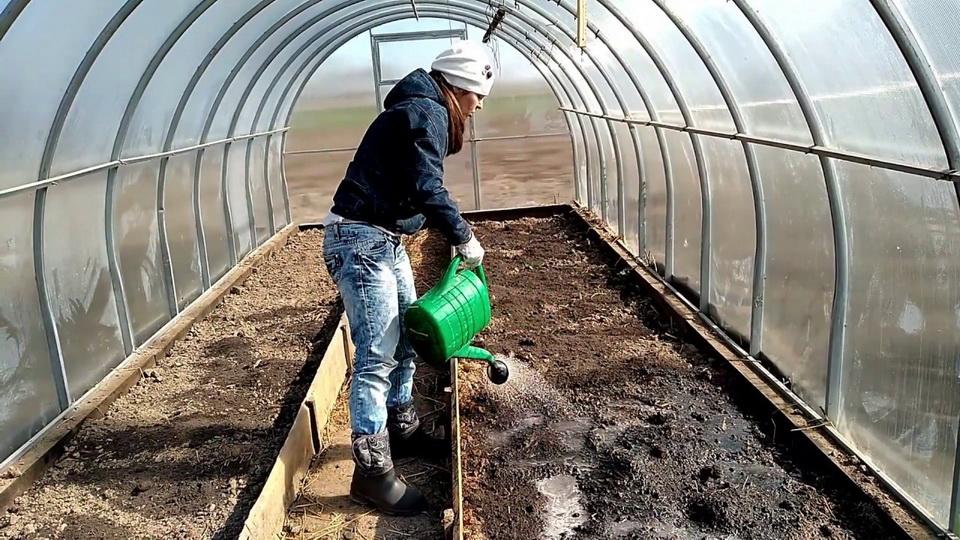 Фитоспорин для обработки земли в теплице