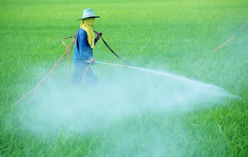 Пестициды и гербициды что это