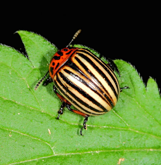 Какие насекомые живут в почве